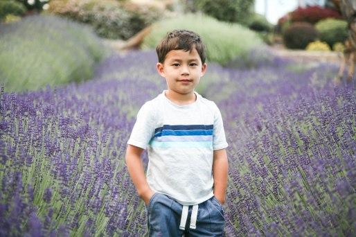 Lavender04