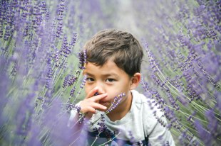 Lavender06