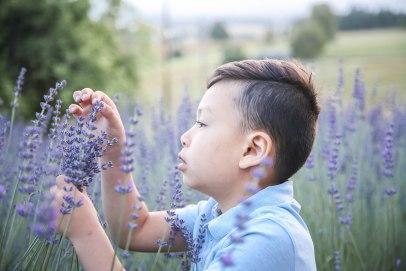 Lavender07